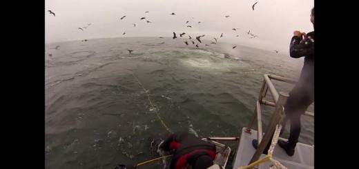 Mergulhadores safam-se por um triz de serem engolidos por baleias