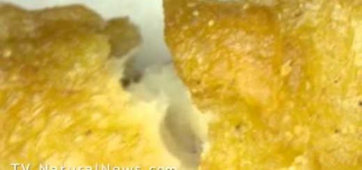 Foram encontrados corpos misteriosos e fibras semelhantes a pêlos nos McNuggets do Mcdonalds