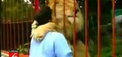 Leão mostra o carinho que sente pela mulher que o salvou da morte