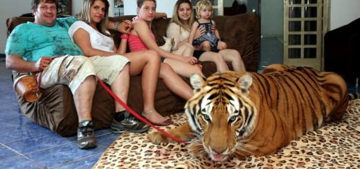 Conhece esta família brasileira que vive com 7 tigres