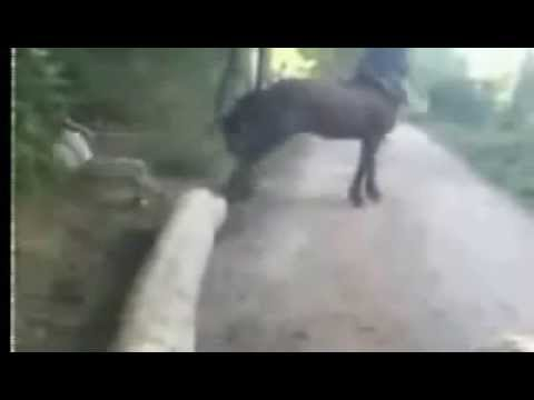 Rapaz bate em cavalo e leva coice impressionante