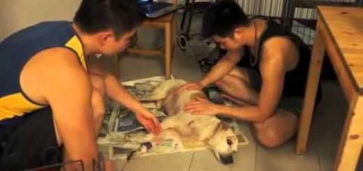 Cão abandonado e já velho morre após ganhar carinho no último dia de vida