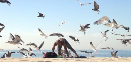 Como fazer uma bela partida na praia com a ajuda de gaivotas