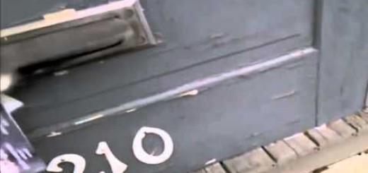 Carteiro luta com gato para entregar o correio