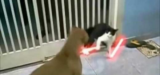gato jedi