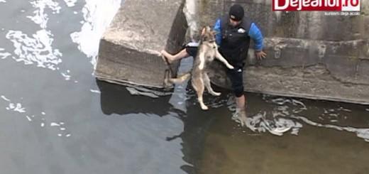 Cão mostra toda a sua gratidão após ter sido salvo