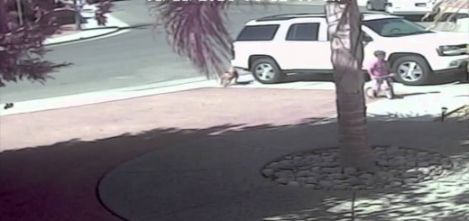 Gata salva criança do ataque de um cão