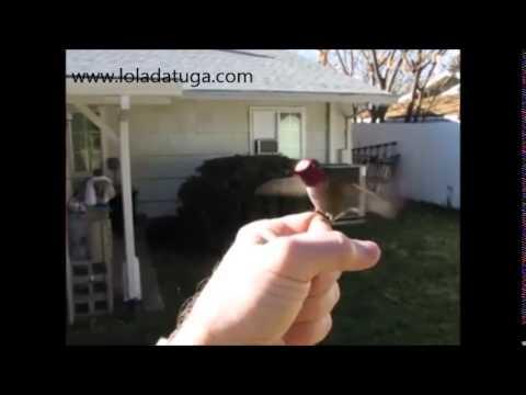 Colibri amestrado