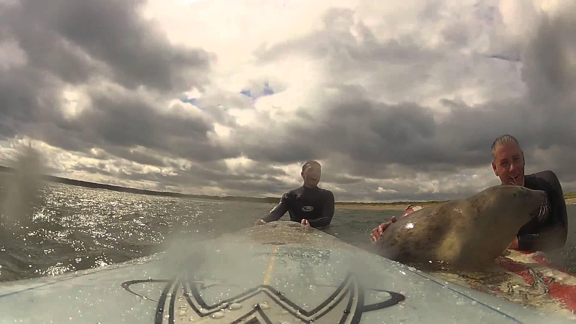 Foca tentou várias vezes equilibrar-se numa prancha de surf