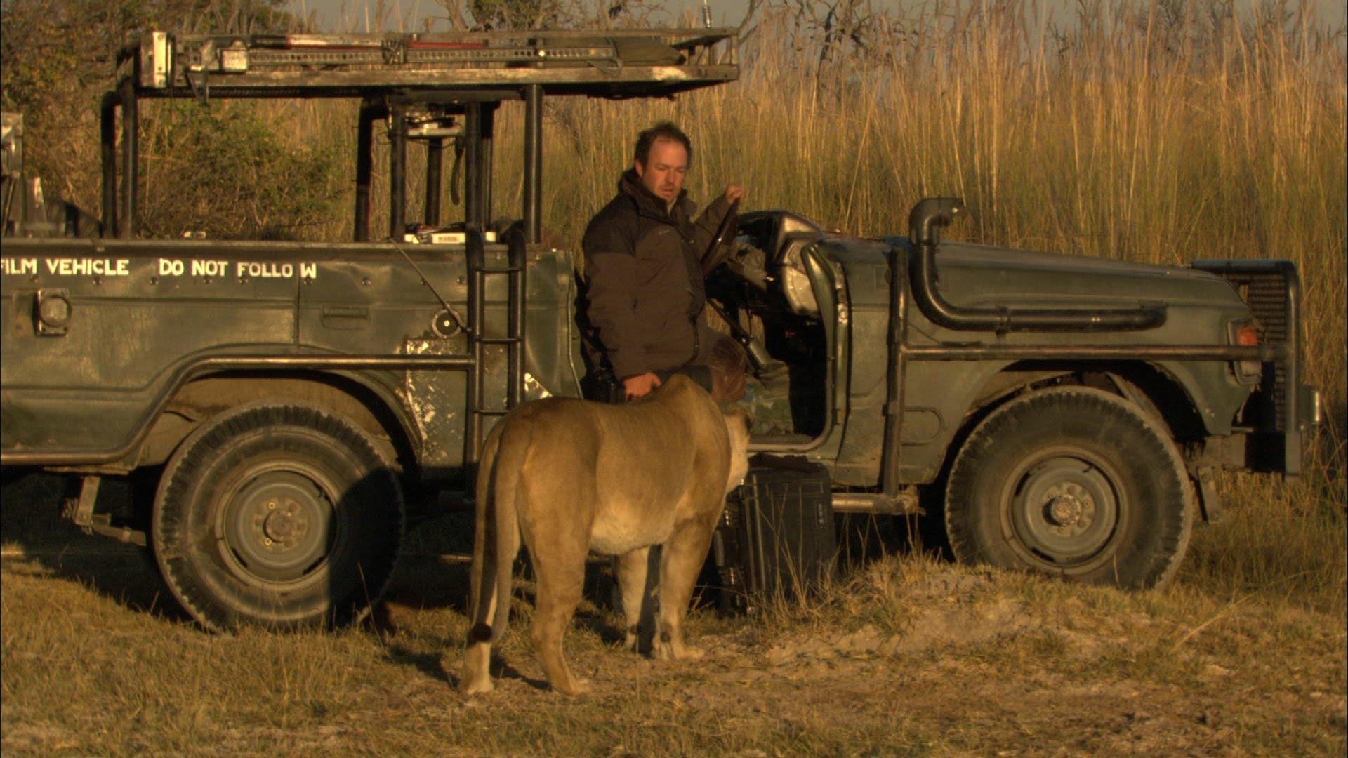 Fotógrafo tem encontro com leoa