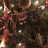 gatos e o natal