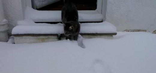 Gato entra em contacto com a neve