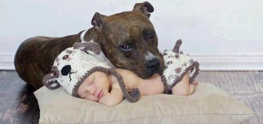 22 fotos que provam que os bebés precisam de animais de estimação