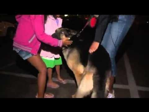 Cão reconhece família depois de 3 anos separados