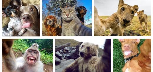 selfies de animais