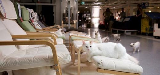 IKEA solta 100 gatos numa loja