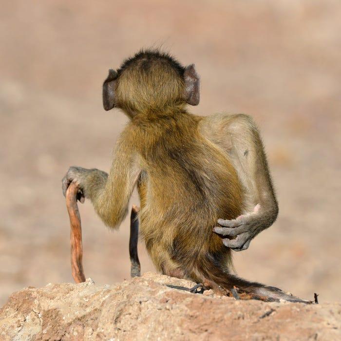 Vida selvagem em fotos hilariantes - baduino a corcar as costas