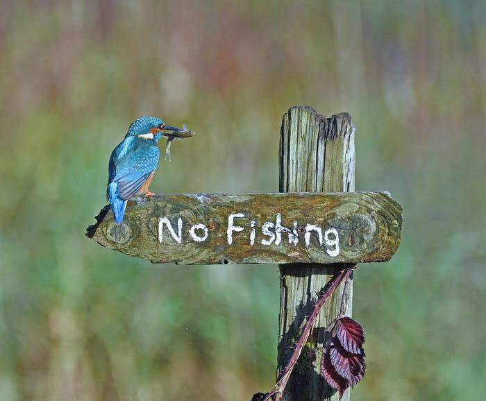 Vida selvagem em fotos hilariantes - não pescar