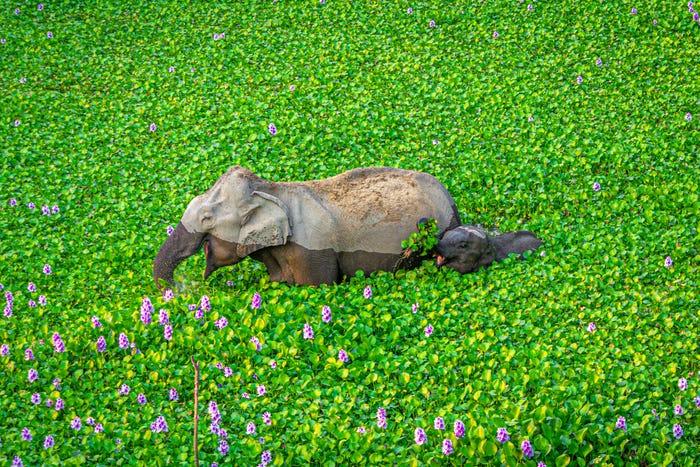 Vida selvagem em fotos hilariantes - elefante dá prenda à mãe