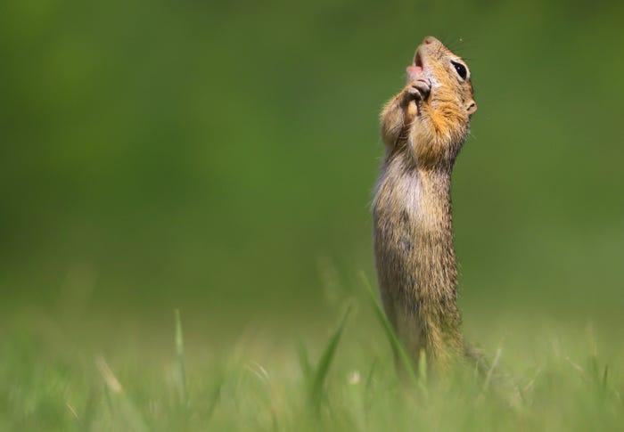 Vida selvagem em fotos hilariantes - esquilo a rezar