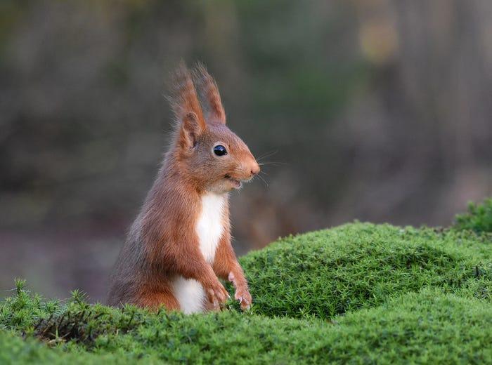 Vida selvagem em fotos hilariantes - esquilo